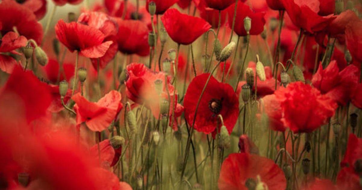 22 червня — День скорботи і вшанування пам'яті жертв Другої світової війни. Це день початку війни, яка забрала життя кожного п'ятого українця.
